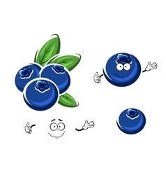 Cartoon fresh blueberry fruits on white vector