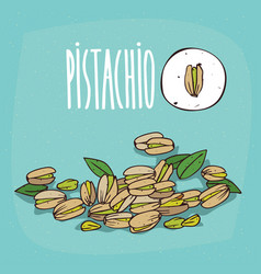 set of isolated plant pistachio seeds herb vector image vector image