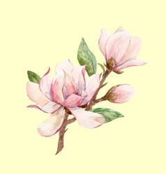 watercolor magnolia floral composition vector image