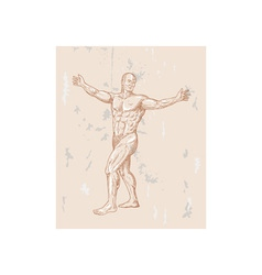Male human anatomy vector