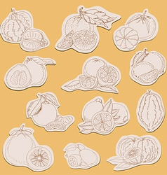 Citrus collection on tags in sketch style vector
