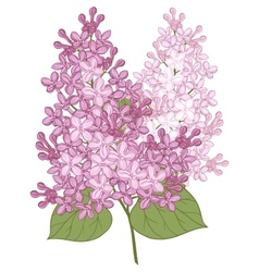 Flowers of lilac for your design vector