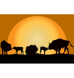 Bisons family at sunset vector image vector image