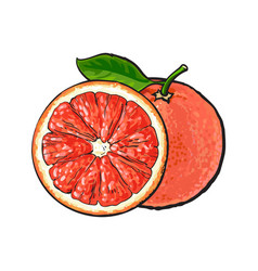 whole and half unpeeled ripe pink grapefruit vector image vector image