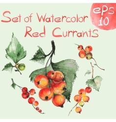Watercolor red currants vector