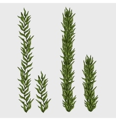 Two seaweed classic underwater grass vector