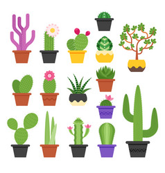 flat colorful set of various cactus vector image
