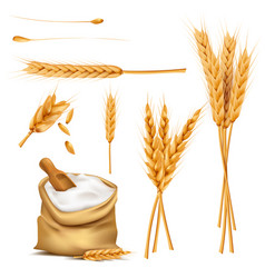 wheat ears grains and flour in sack set vector image vector image