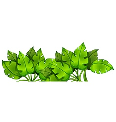Green leafy plant vector