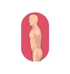 Male human anatomy standing side view vector