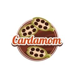 Cardamom spice vector