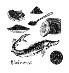 Hand drawn set of black caviar vector