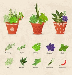 Rustic collection of different herbs planted in vector