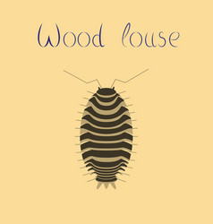 flat on background wood louse vector image