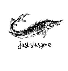 Hand drawn sturgeon vector image vector image