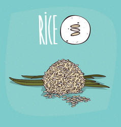 Set of isolated plant rice grains herb vector