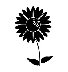 silhouette gerbera flower natural vector image