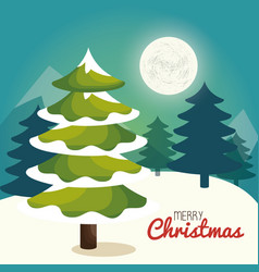 Christmas tree pine card vector