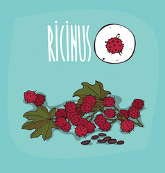 set of isolated plant ricinus fruits herb vector image vector image