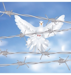 Dove and Barbed Wire vector image vector image