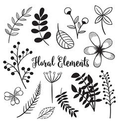Hand drawn flowers and foliage elements vector image