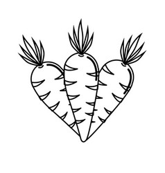 Silhouette carrots vegetable icon image vector