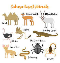 flat style set of desert wild animals vector image