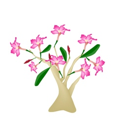 Desert rose or bignonia on white background vector