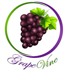 Grape vine on round label vector