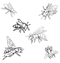 flies sketch by hand pencil drawing vector image