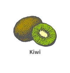 Hand-drawn ripe juicy kiwi and cut a piece half vector