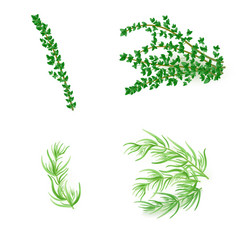 Set of thyme and tarragonin realistic style vector