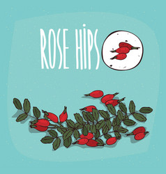 Set of isolated plant rose hips fruits herb vector