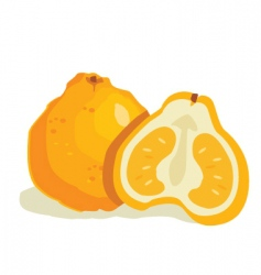 ugly fruit vector image