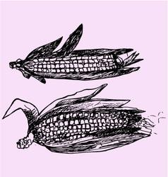 Ripe corn leaves vector