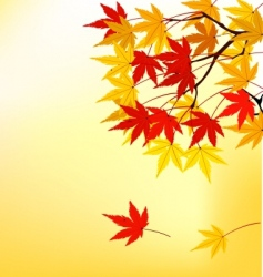 autum leaf vector image