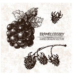 Digital detailed brambleberry hand drawn vector