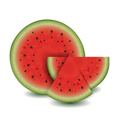 Watermelon collection vector