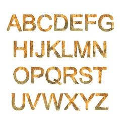 Orange font vector