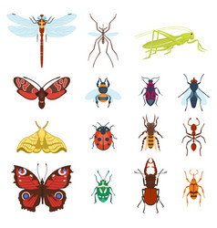 Colorful top view insects icons isolated on white vector