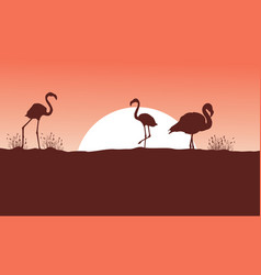 Flamingo at sunset scene silhouettes vector