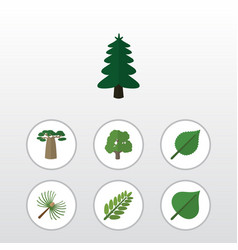 Flat icon natural set of baobab leaves rosemary vector