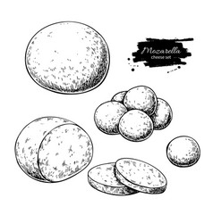 Mozzarella cheese drawing hand drawn round vector