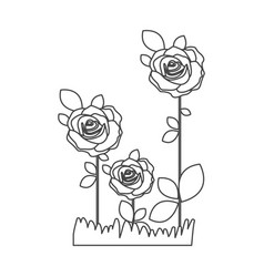 Silhouette sketch roses planted with leaves and vector