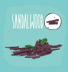 Set of isolated plant sandalwood sticks herb vector