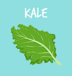 fresh kale on blue balckground vector image vector image