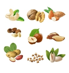 Set icons of nuts vector