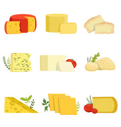 different types of cheese pieces popular kind of vector image