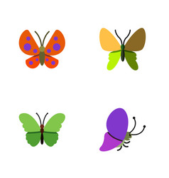 Flat monarch set of moth beauty fly summer vector