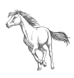 White horse freely running sketch portrait vector